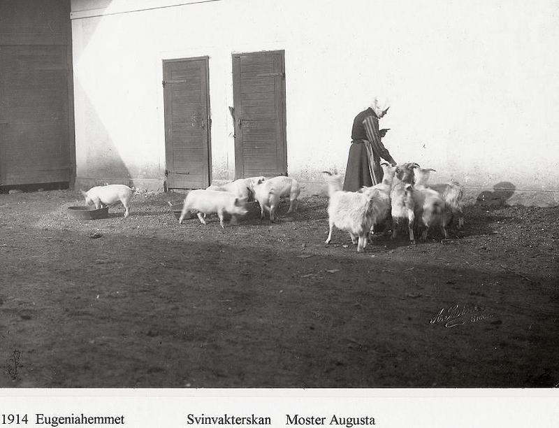 Svinvakterskan Moster Augusta 1914.