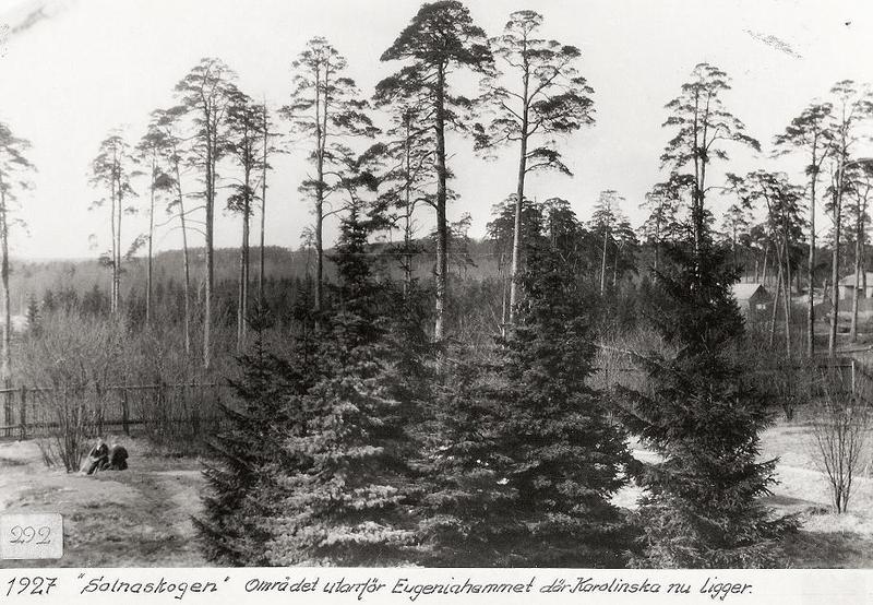 Solnaskogen 1927.